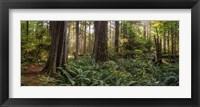 Framed Cathedral Forest