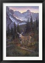 Framed High Country Muley