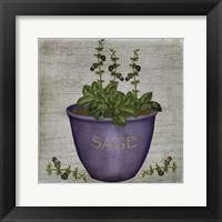 Framed Herb Sage