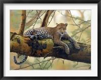 Framed African Leopard