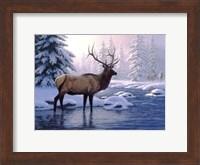 Framed Elk In Winter