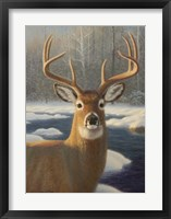 Framed White Tail Deer Portrait