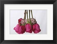 Baby Sleeping On Roses Framed Print