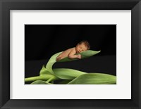 Framed T. Foucas Baby Leaves