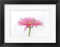 Hartley Luana Daisy Framed Print