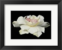 Nielson White Flower Framed Print