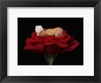 Red Rose Jones Framed Print