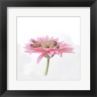 Call Chari White Pink Daisy Framed Print