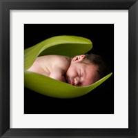Mock Leafbaby I Framed Print