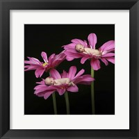 Stabile Holli Babies In Flower Framed Print