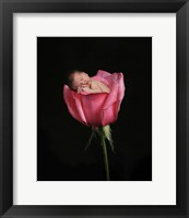 Lund Susie Upward Rose  II Framed Print