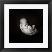 Hardy I Framed Print