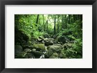 Framed Manoa Stream