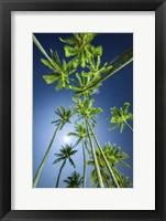 Framed Full Moon Kapiolani Trees