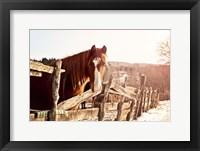 Framed Brown Horse