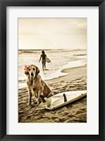 Framed Dog Surfer