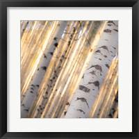 Framed Aspen Light