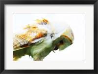 Framed Barn Owl 1