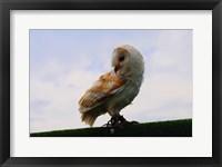 Framed Barn Owl 2