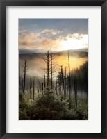 Framed Vermont Swamp at Sunrise