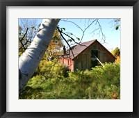 Framed Overgrown Barn