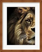 Framed Majestic Dominance