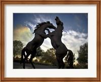 Framed Stallions