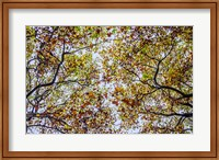 Framed Autumn Colors