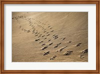 Framed Crossing Paths
