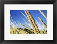 Framed Summer Breeze