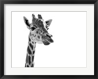 Framed Giraffe Expressionism