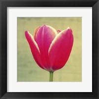 Framed Tulip in Fuchsia I