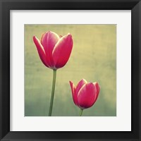 Framed Tulip in Fuchsia II