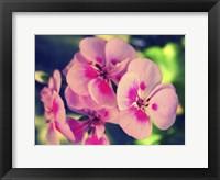 Framed Pink Blossom II