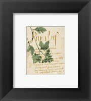 Framed Herb Study V