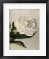 Framed Gardenia Grunge II