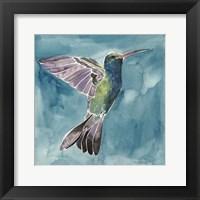 Framed Watercolor Hummingbird I