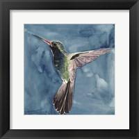 Framed Watercolor Hummingbird II