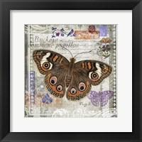 Framed Butterfly Artifact II