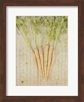 Framed Herb Still Life III