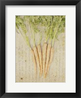 Framed Herb Still Life III