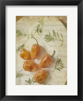 Framed Herb Still Life VI