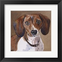 Framed Sam Dachshund