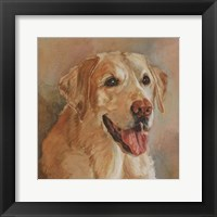 Calie Yellow Lab Framed Print