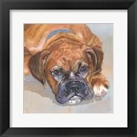 Framed Baillie Boxer