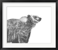 Wildlife Snapshot: Grizzly Framed Print