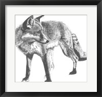 Wildlife Snapshot: Fox Framed Print