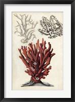 Seashore Field Notes VI Framed Print