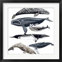 Whale Display II Framed Print