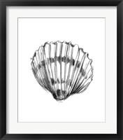 Framed Shell Sketch VI